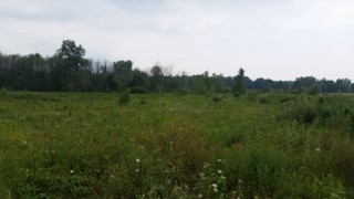 Country Building Lot in Morrow Co.