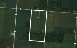 80 Acres of Farmland in NW Champaign Co.