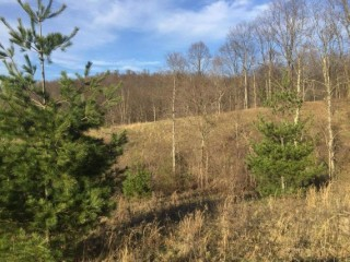 Online Only Real Estate Auction of 10.11 Acres