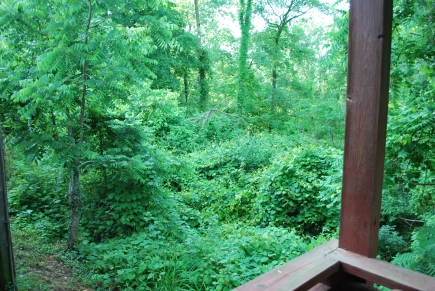 View from back porch of owner's suite