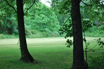 A deer on the back of the property