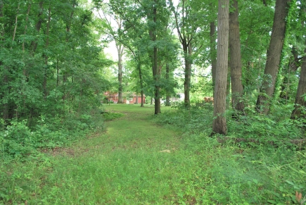 Some of the woods by the house
