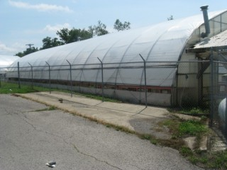 Greenhouse Business / Real Estate Auction