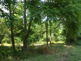 Real Estate Auction - Vacant Land